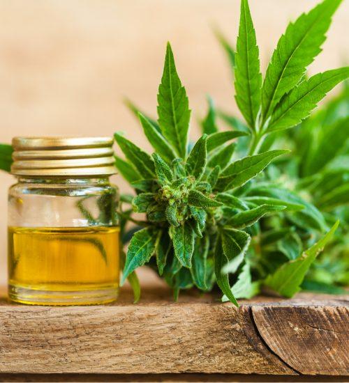 achat cbd L'huile de CBD entre posologies, usages et bienfaits, que devez-vous savoir ?